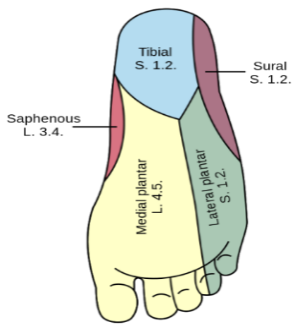 foot surface diagram